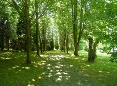 árboles-REF.2154